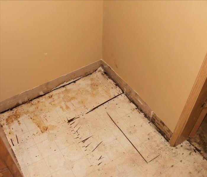 Mold Remediation in Buffalo, NY After