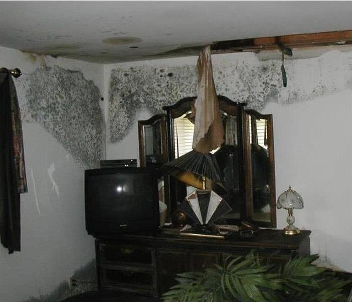 Mold Remediation The Causes of Mold In Your Home