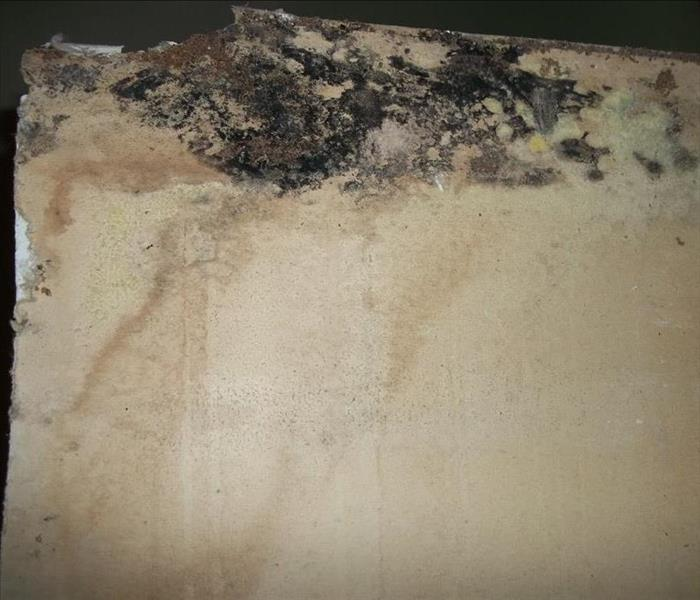 An Overview Of Mold