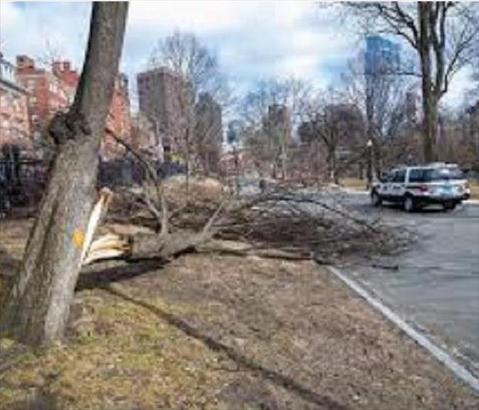 brown, large tree down in road with blue and white police vehicle next to it