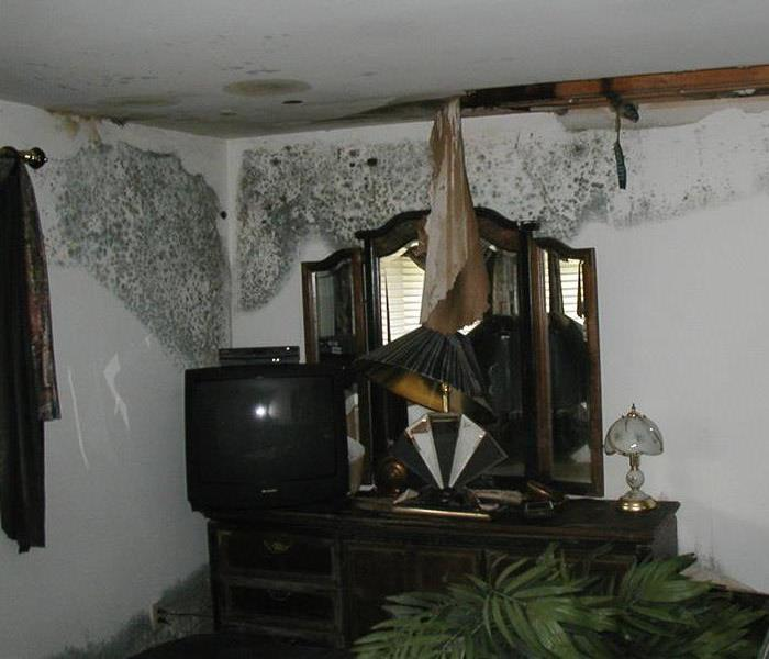 Mold Remediation What Causes Mold in a Home