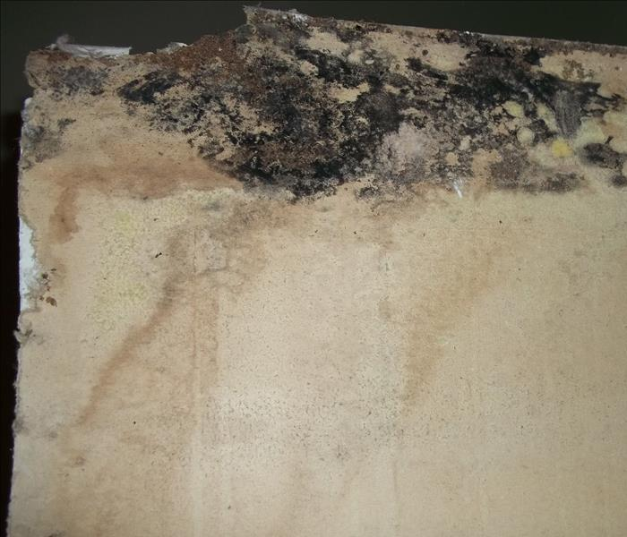 Mold Remediation The Science of Mold