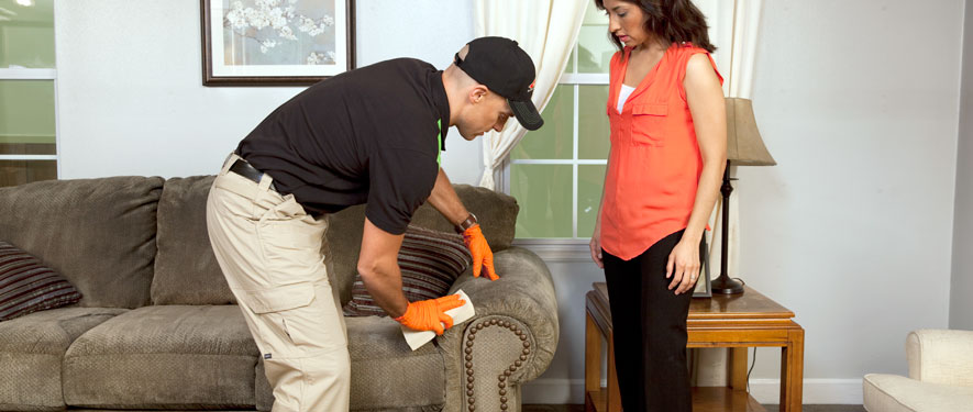 Lackawanna, NY carpet upholstery cleaning
